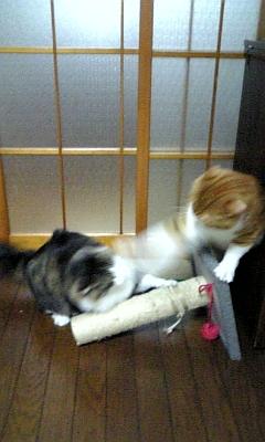 格闘技!!