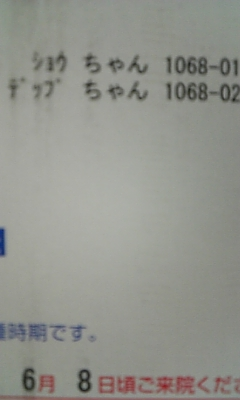 ねこ日記!