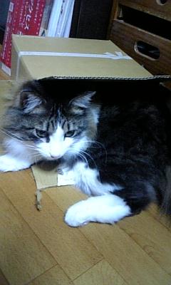 箱詰め?☆