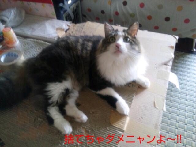 Keitai0627_330