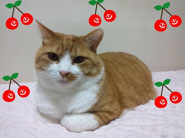Rakugaki_20120119_0012