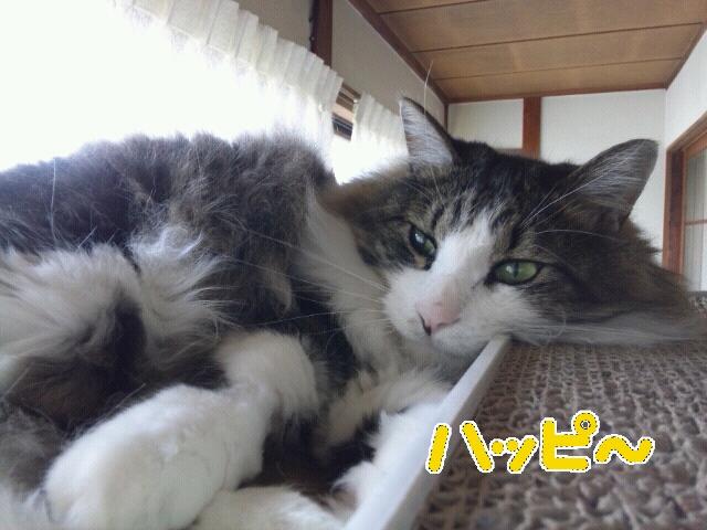 Rakugaki_20120507_0068