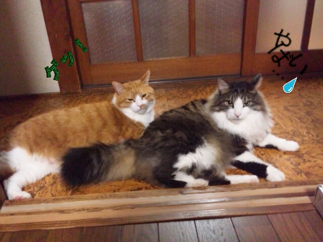 Rakugaki_20120529_0004
