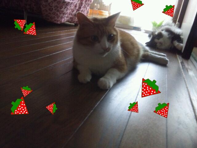 Rakugaki_20120729_0023