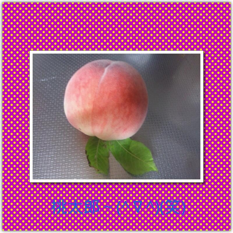 Keitai0729_099