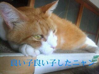 Keitai0810_053