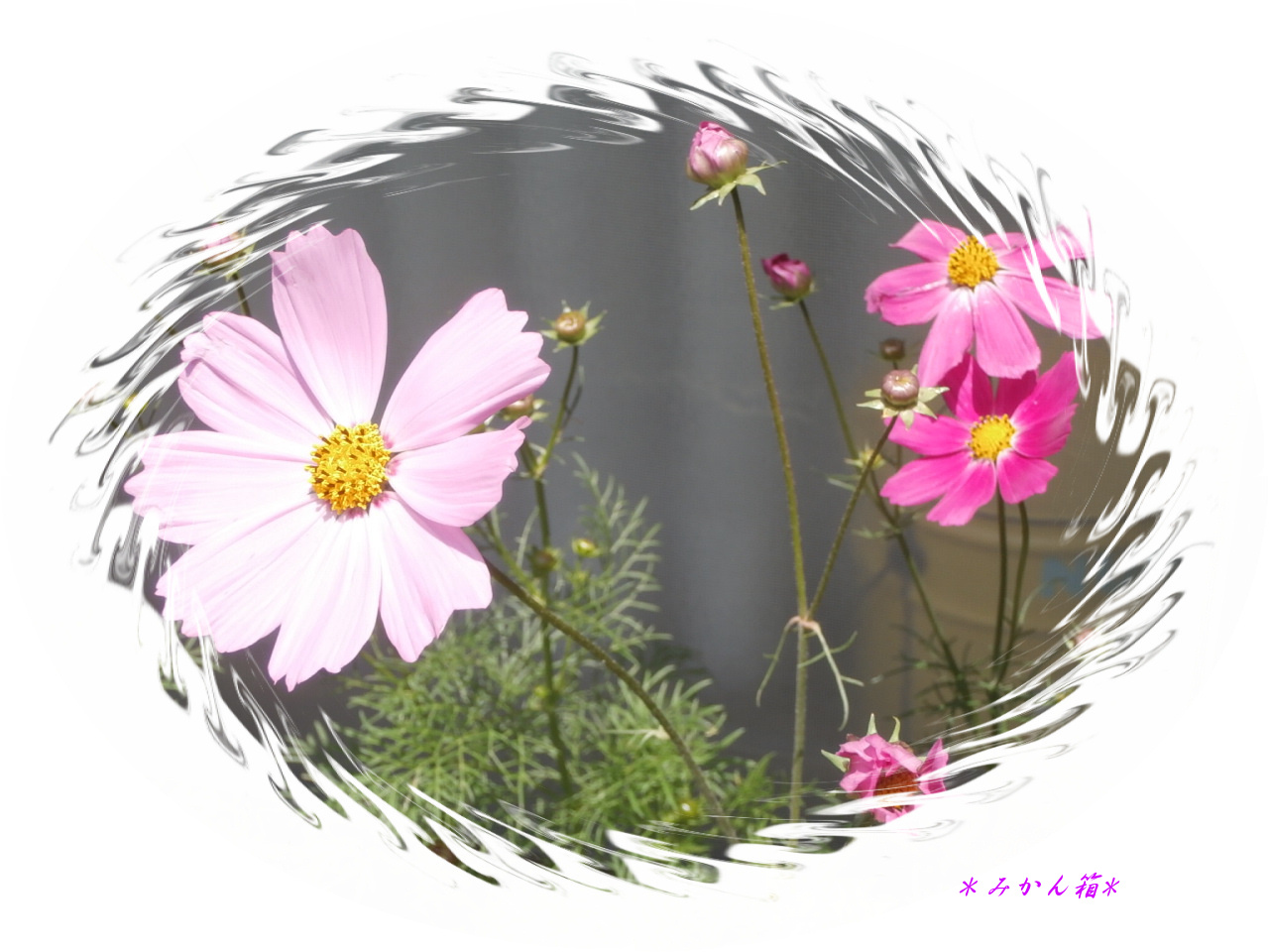 Dejikame0530_015_3