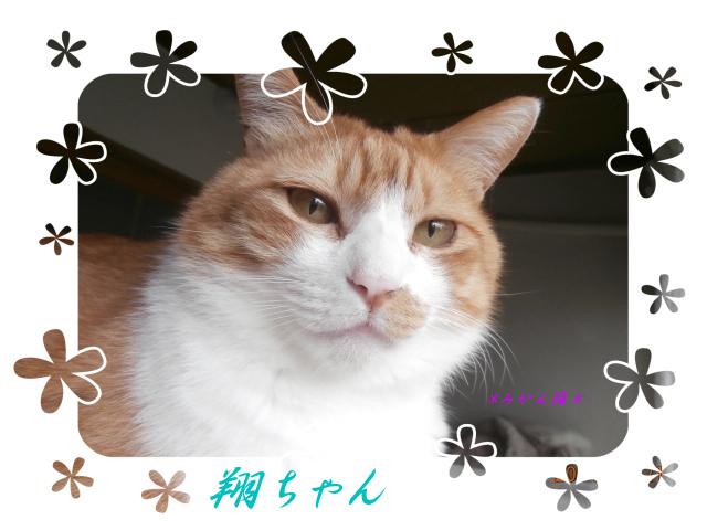 Dejikame0530_003_3